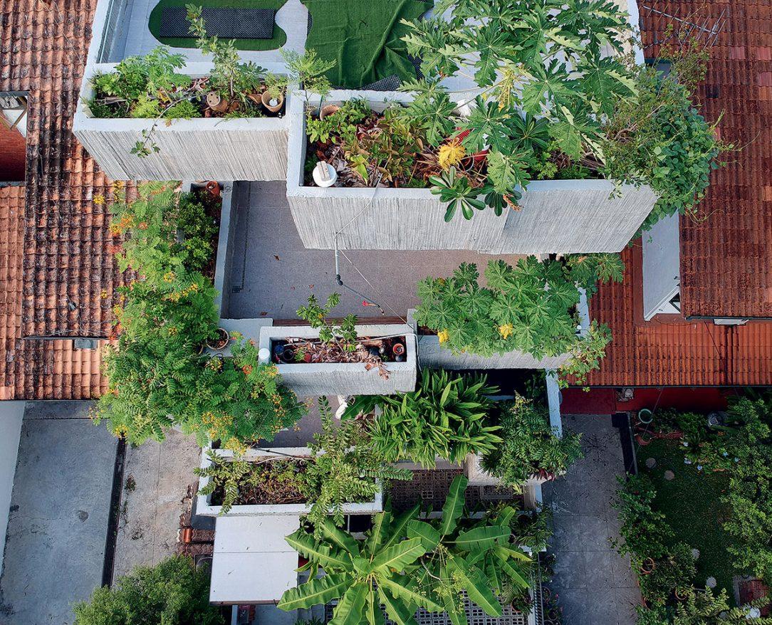 V betonových truhlících roste pestrá směsice tropických plodin.