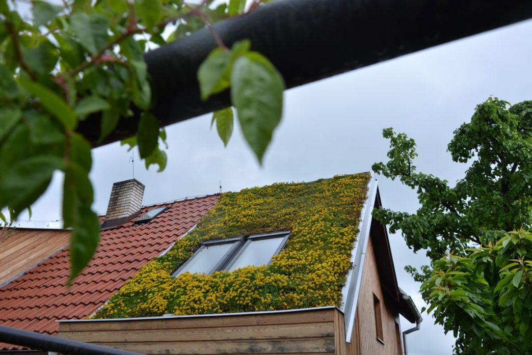 zelená střecha na rodinném domě ve Statenicích