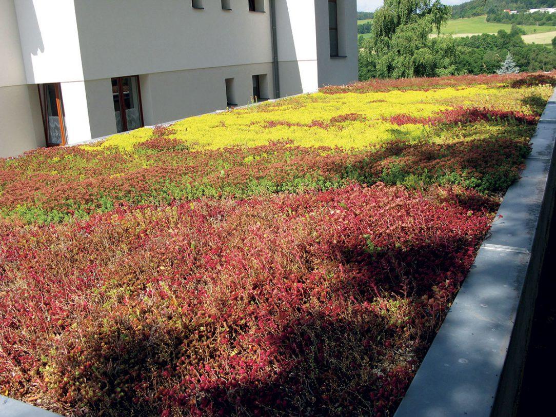 Extenzivní vegetační střecha