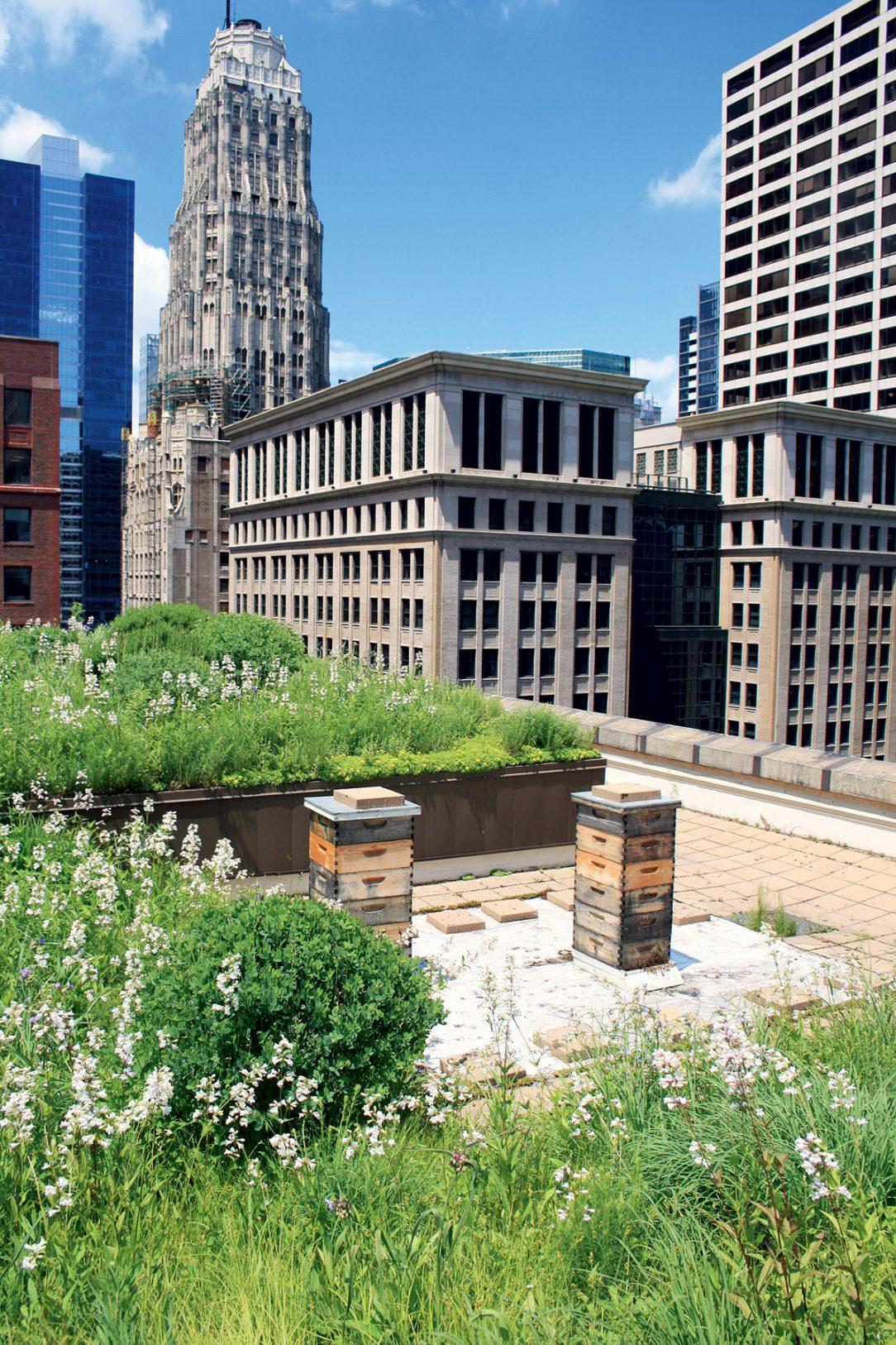Zelené steřchy mohou alespoň částečně navrátit zastavěné území přírodě.