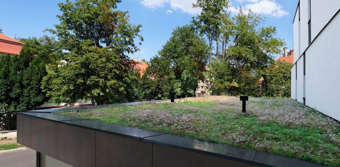 Vegetační strecha 5
