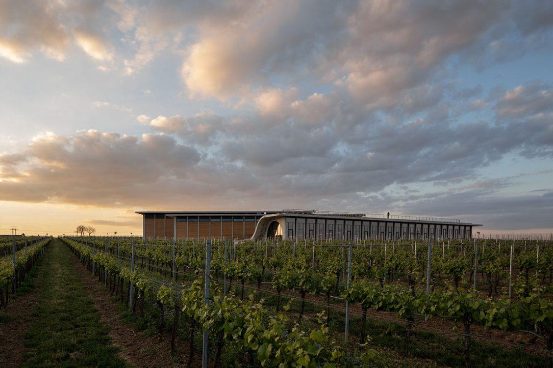 Vinařství Lahofer patří se svými 430 hektary vinic a roční produkcí okolo 800 tisíc lahví k největším pěstitelům révy u nás