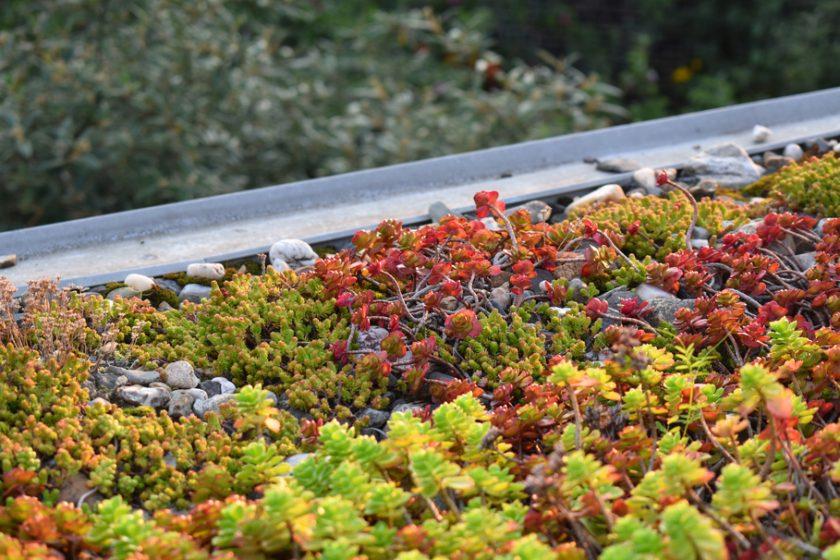 Zelených střech v Česku přibývá