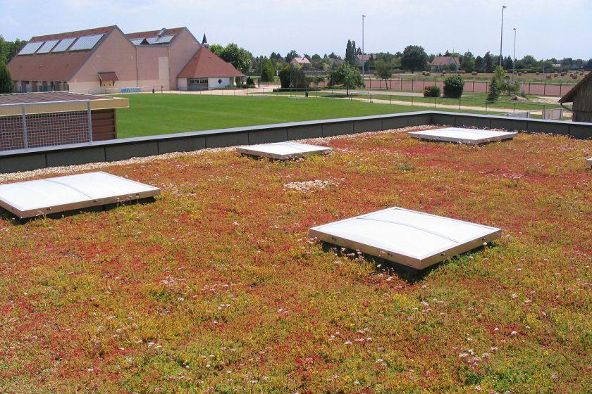 Vegetační střechy zlepšují prostředí měst