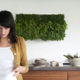Domov plný zeleně