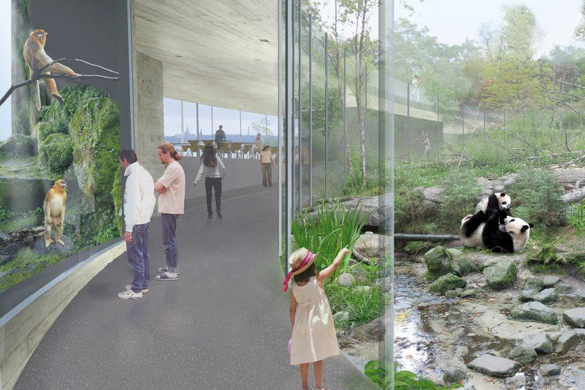 Výsledky architektonické soutěže na návrh pavilonů pand a ledních medvědů