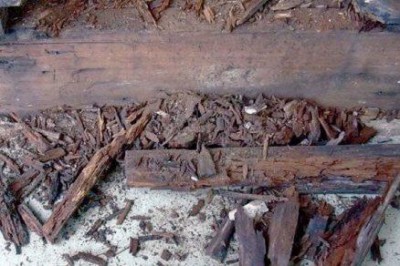 Ochrana dřeva před degenerativními vlivy prostředí