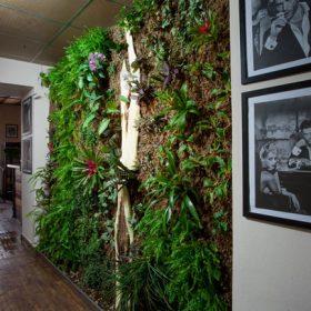 Živá vertikální zahrada v turnovské kavárně